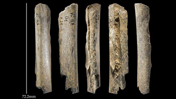 sn-cavebones